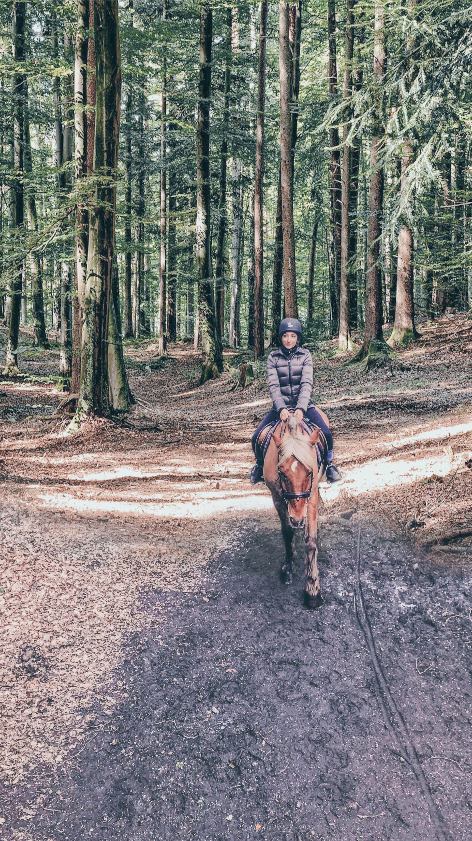HorseRidingINSTA