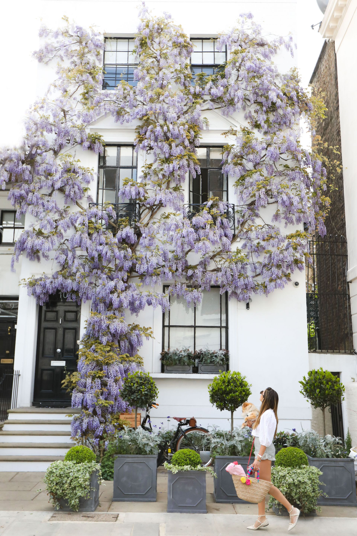 wisteria (2 of 17) 2